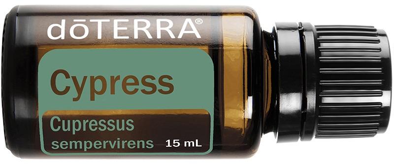 dT cypress
